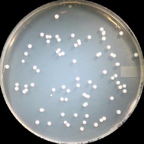 Participant ABCC045 - Genotype CT (Wet)
